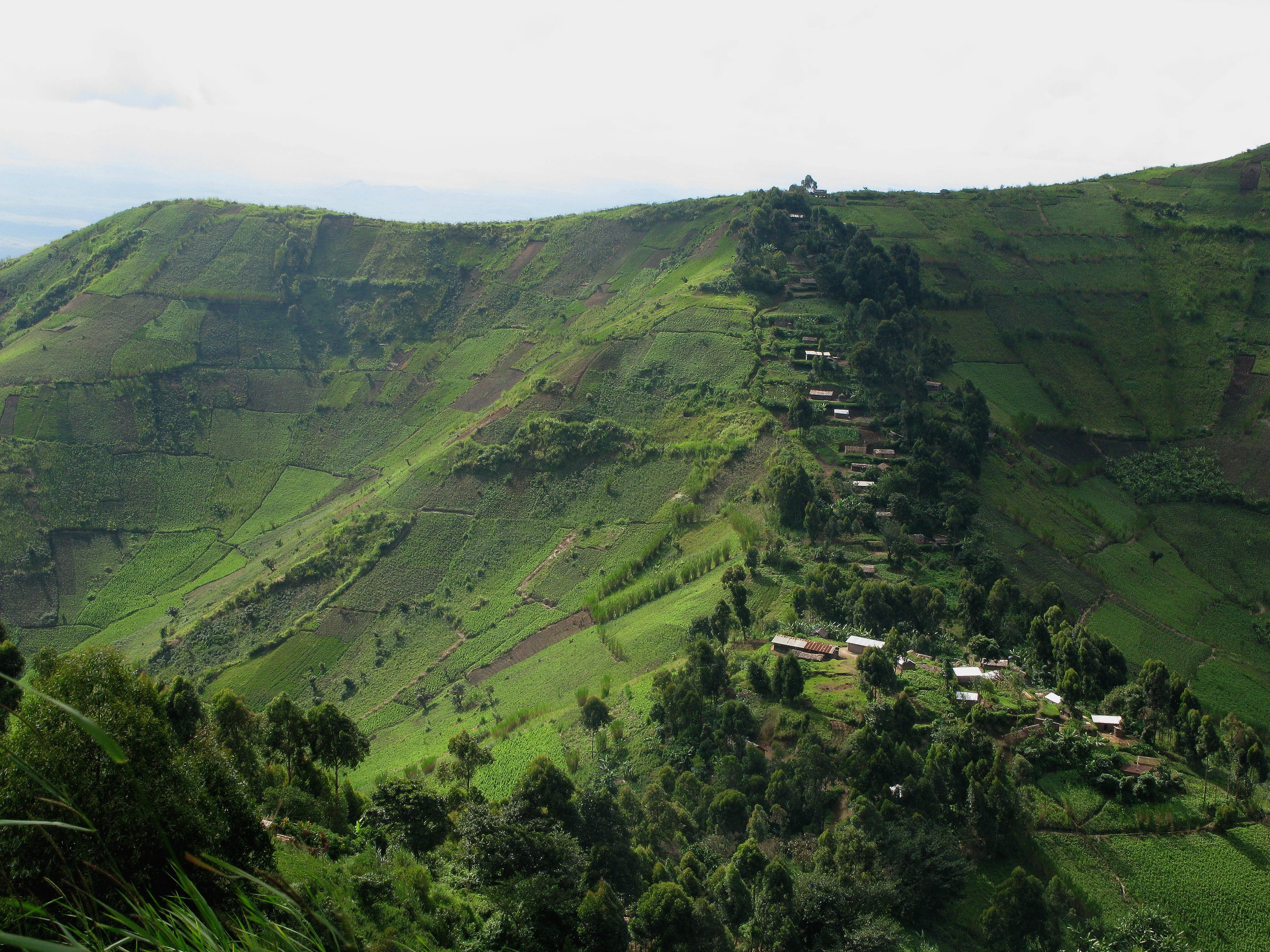 Global Health Bulletin - DRC